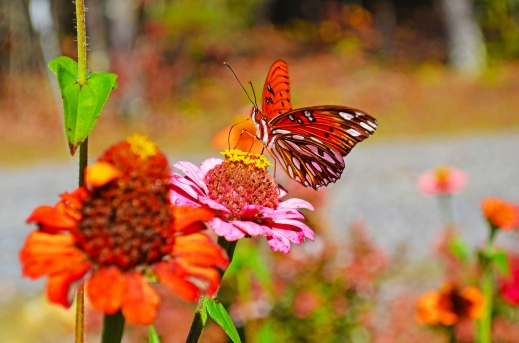 Butterfly & Flowers_edited