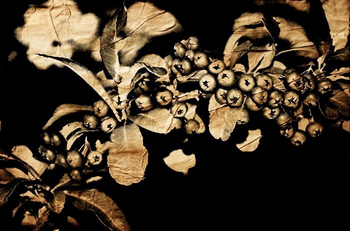 2016-11-12 crumpled paper hawthorne