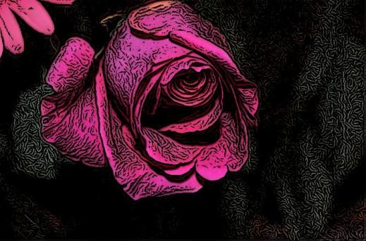 2016-11-19 Unfolding Rose