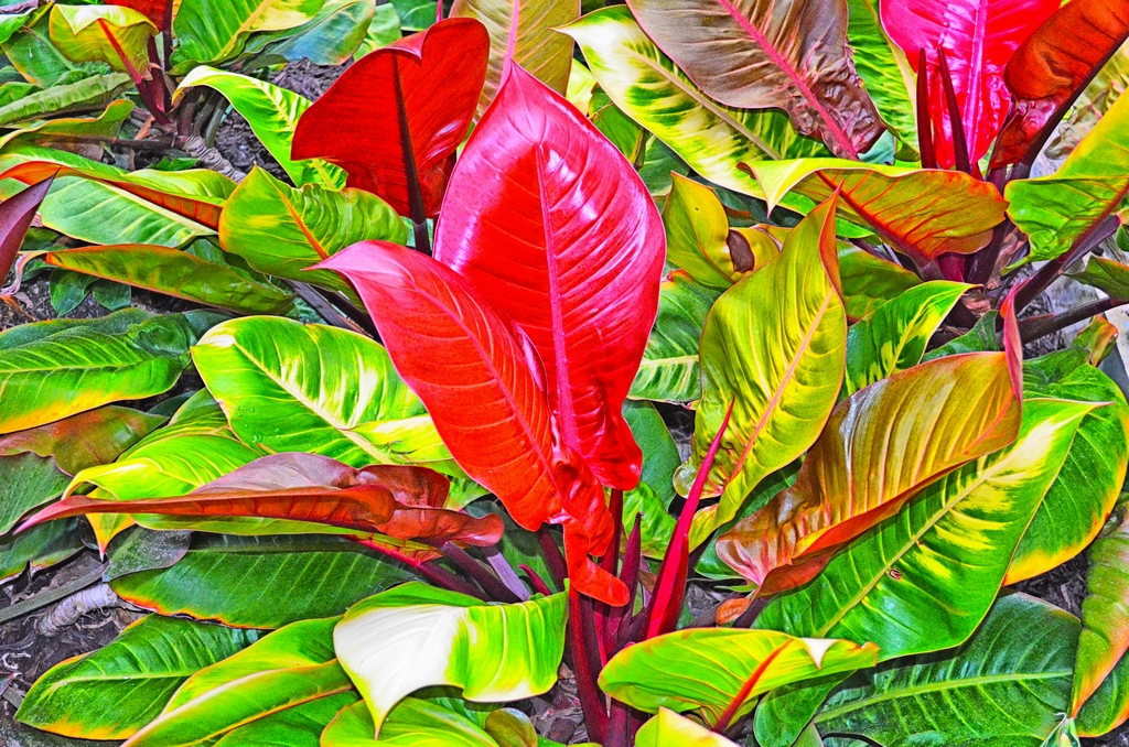 2020.06.06. bright leaves edited