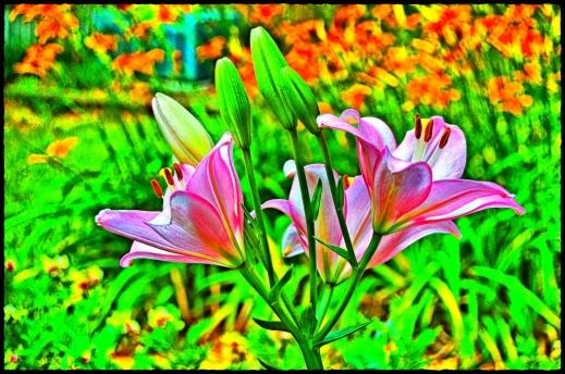 2020.06.13 Lilies edited
