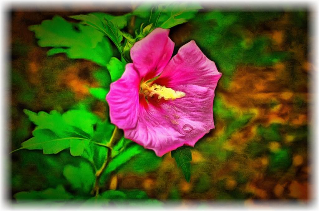 2020.06.16 Shrub Flower edit rr