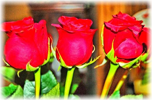 2020.06.18 Roses rr edit