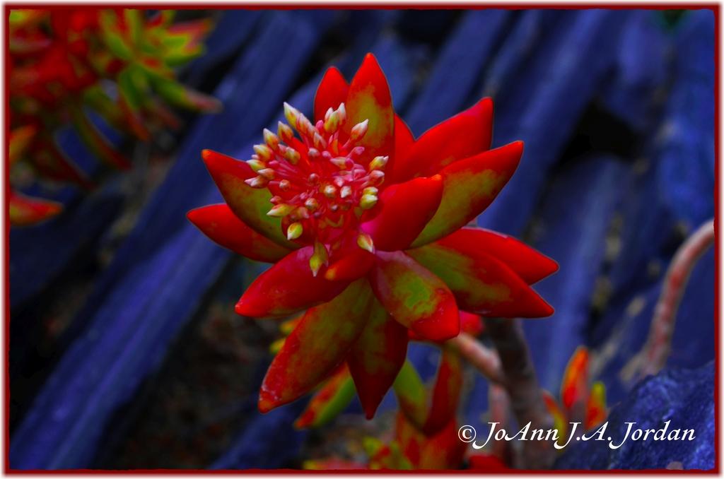 2020.07.03 Flower Among Stones rr