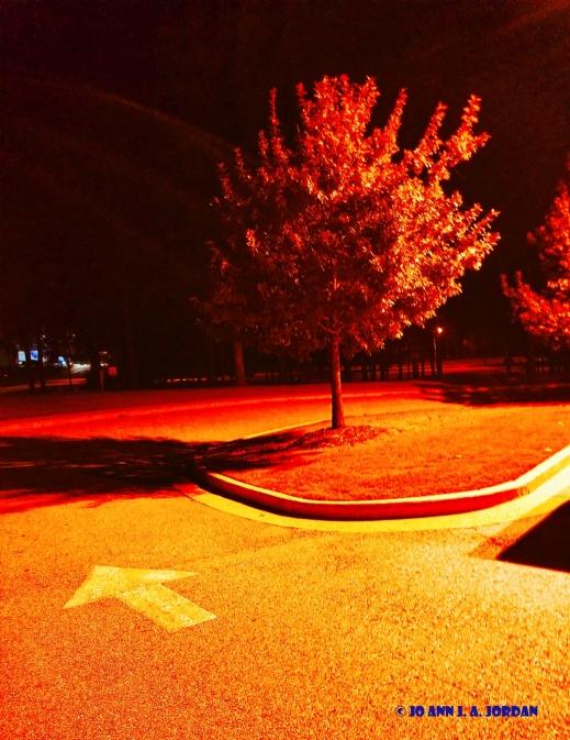 2020.07.07 Park Tree Night rr