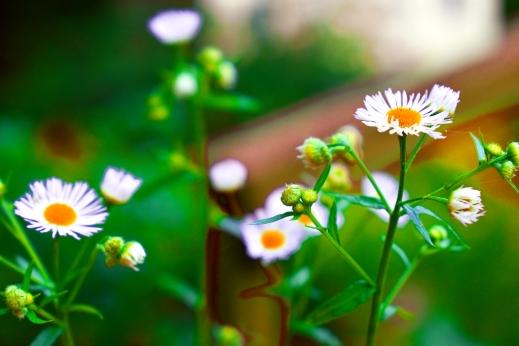 2020.07.09 Weeds at Ramp rr