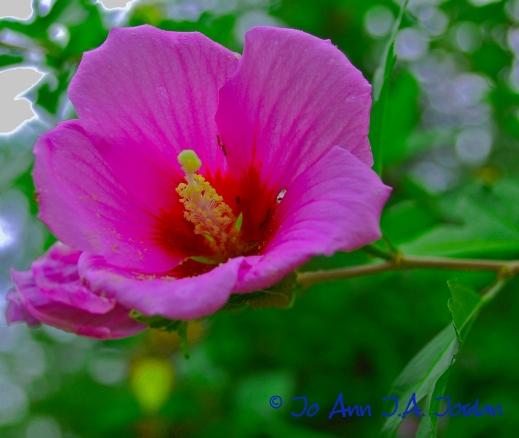 2020.07.19 Yard Flower rr