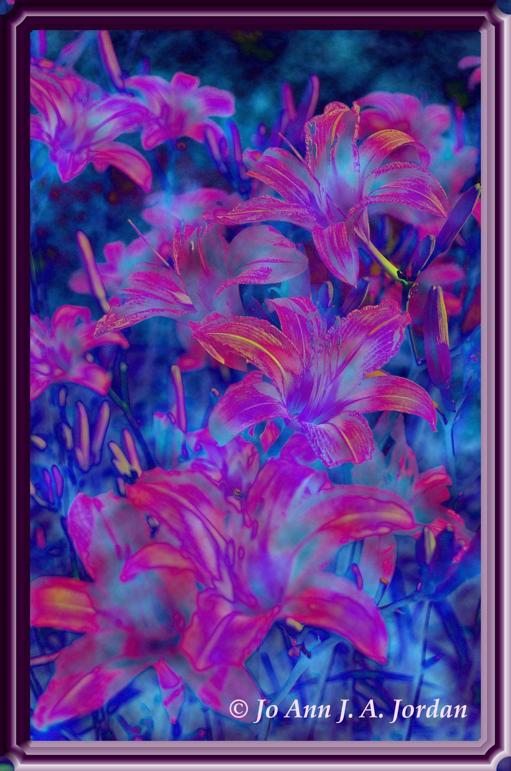 2020.08.10 Lilies Orange rr